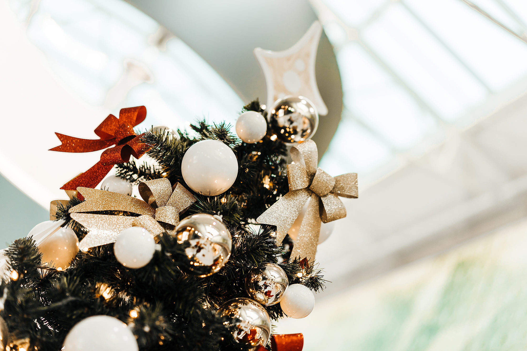 Top of the Christmas Tree Free Stock Photo