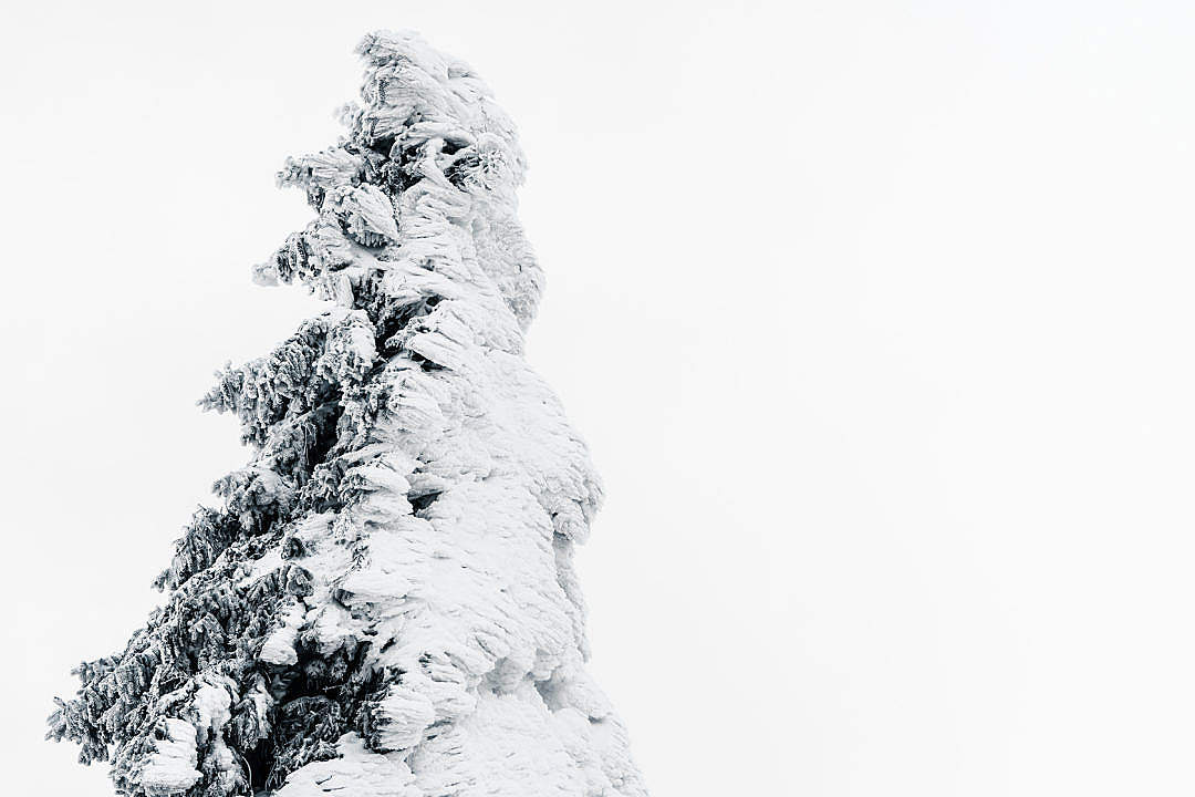 Download Tree Covered with Snow FREE Stock Photo