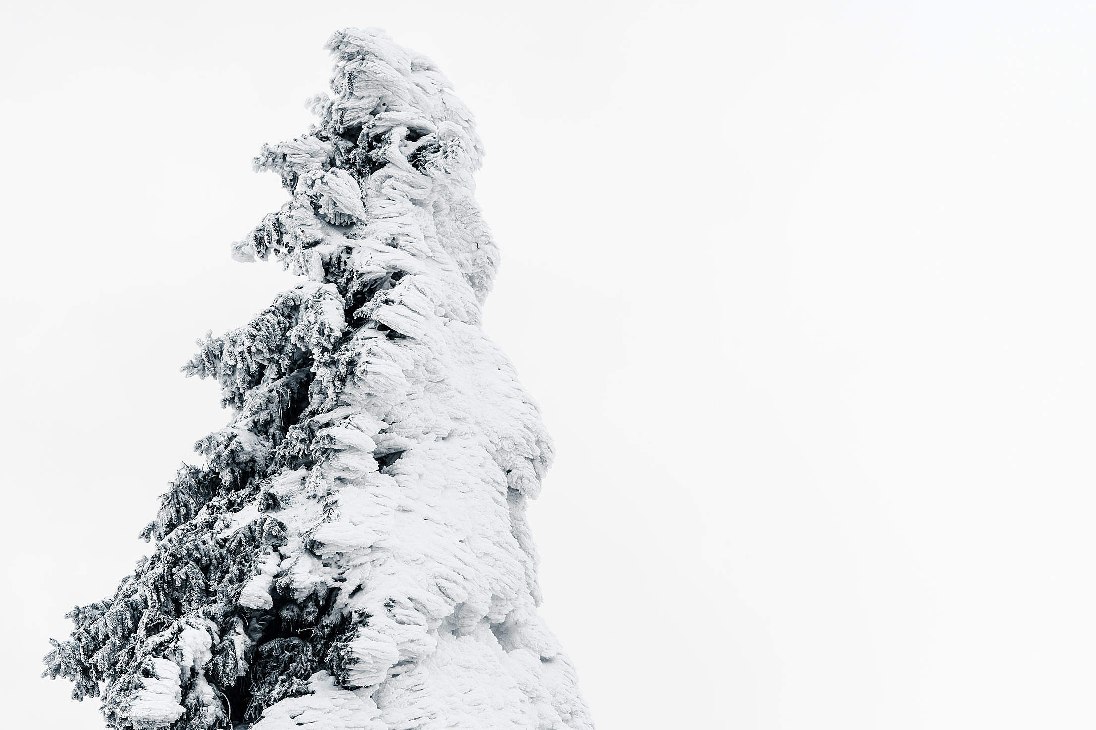 Tree Covered with Snow Free Stock Photo