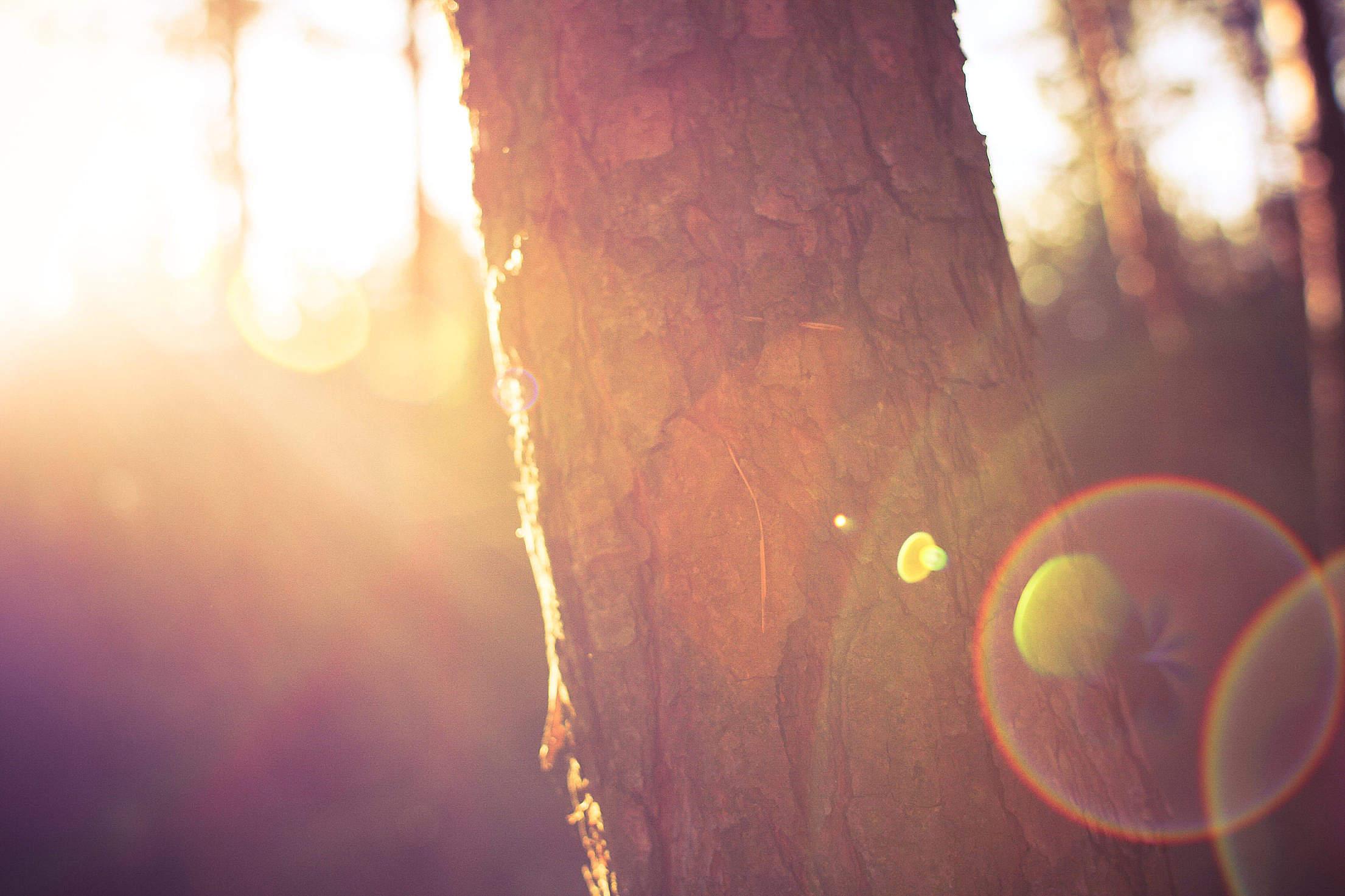 Tree in Morning Sunlights Free Stock Photo