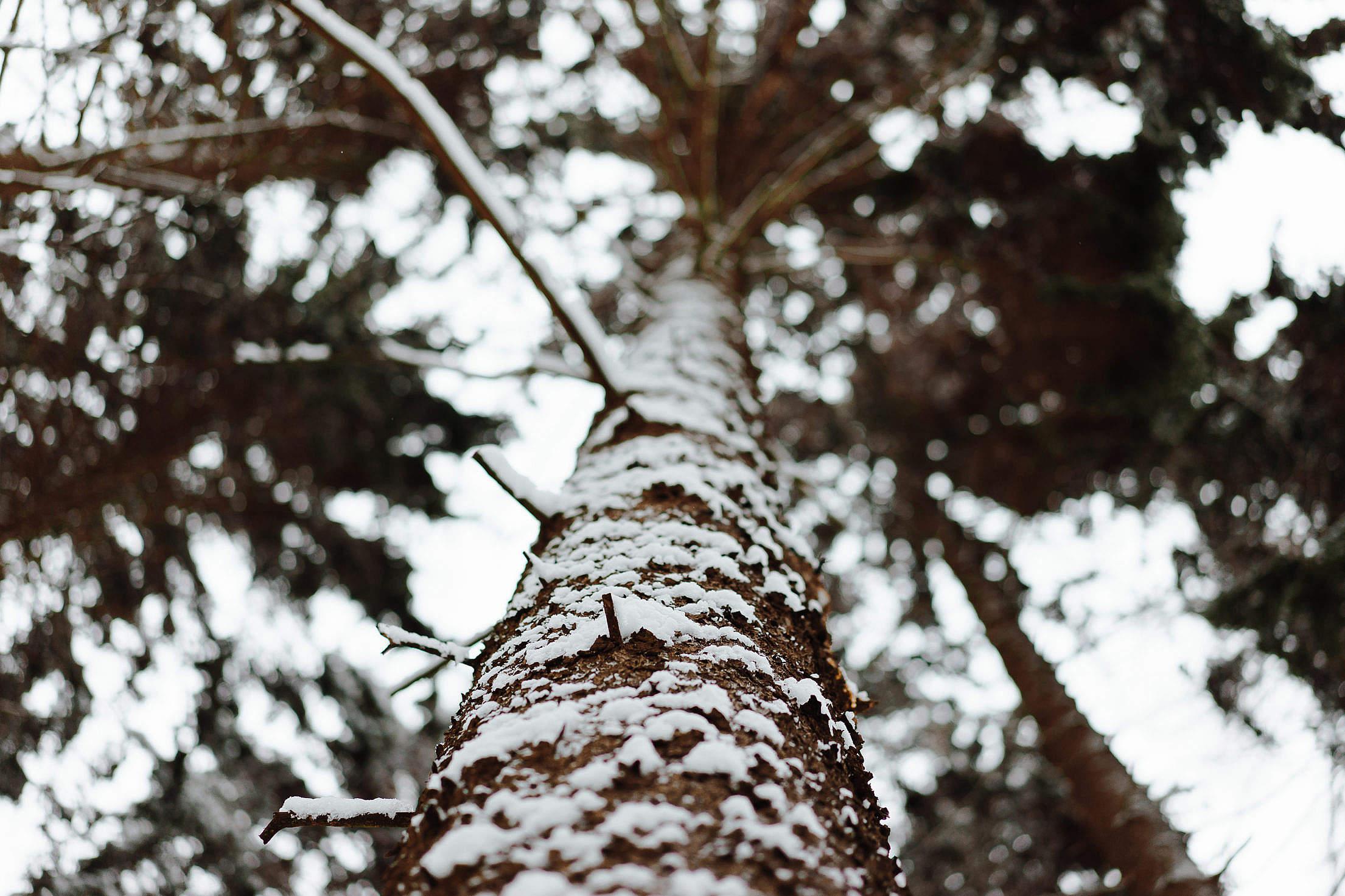Tree Trunk in Winter Free Stock Photo