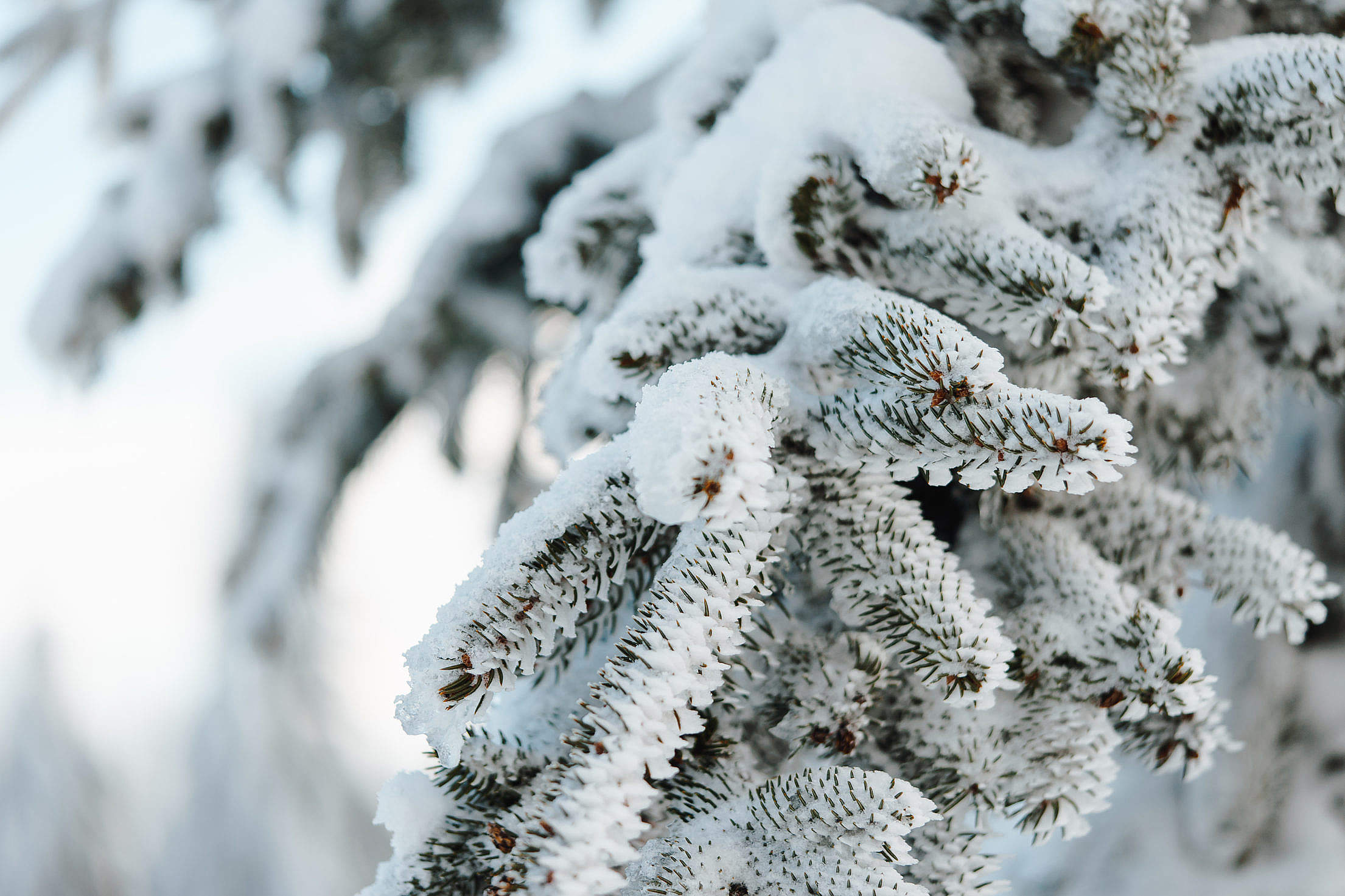 Tree Under The Snow in Winter Free Stock Photo