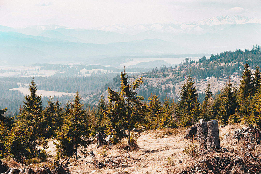 Download Trees in the Mountains Scenery FREE Stock Photo