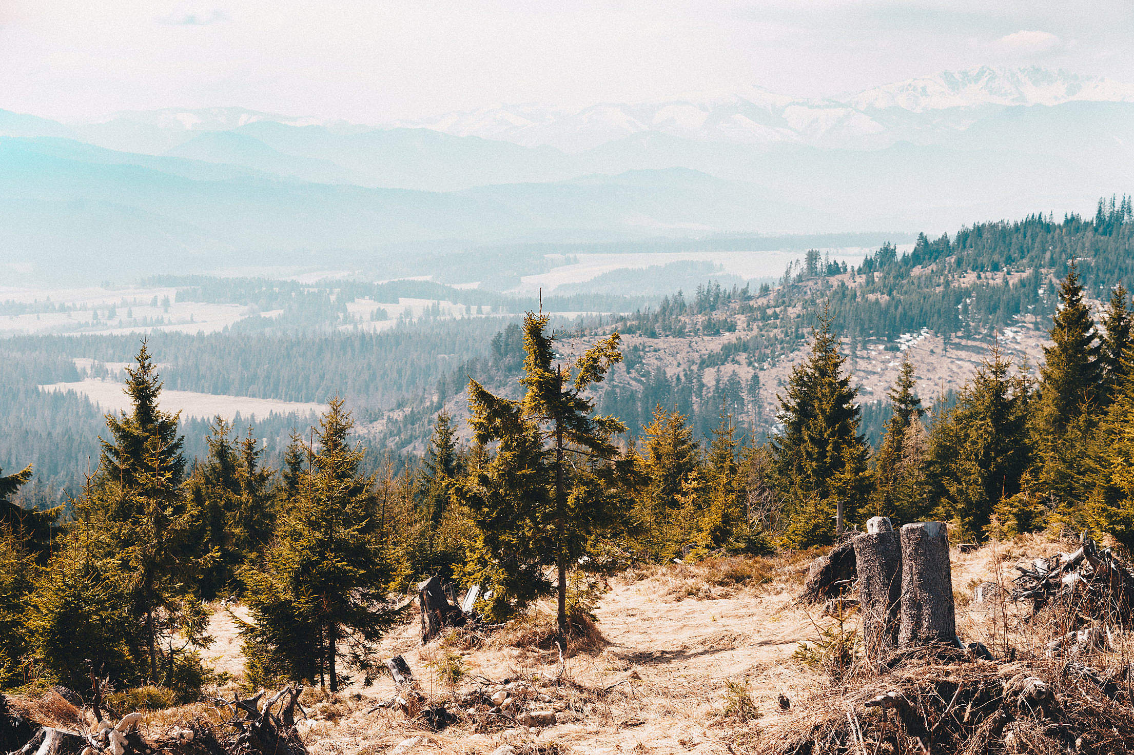 Trees in the Mountains Scenery Free Stock Photo