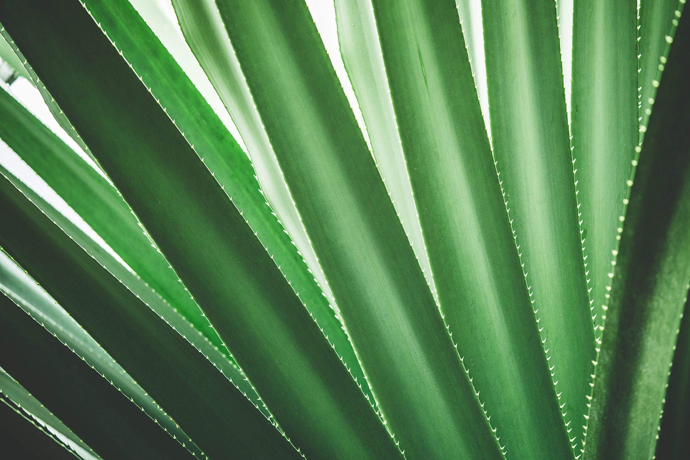Tropical Plant Close Up Minimalistic Background Free Stock Photo