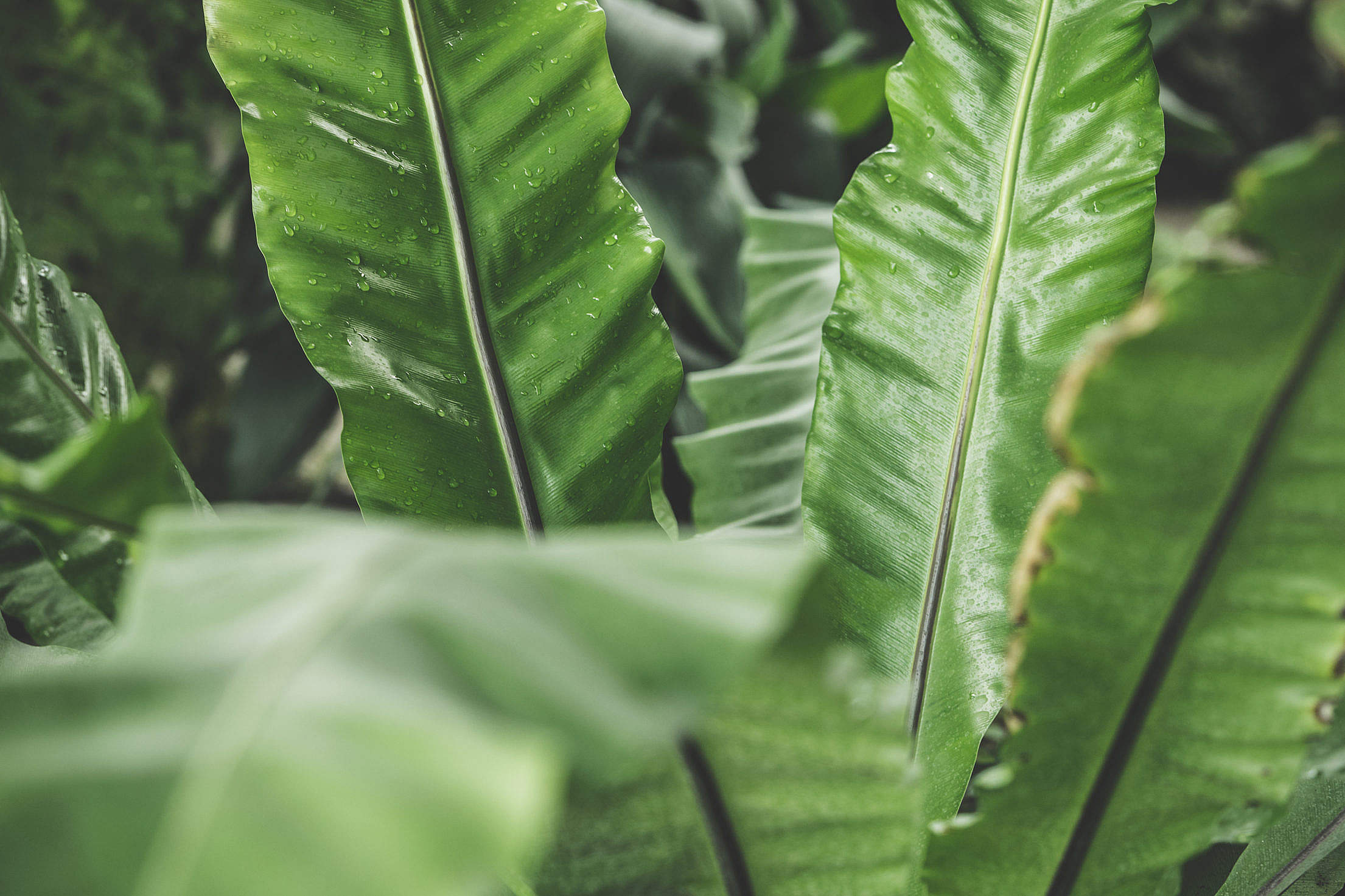 Tropical Plant Leaves Free Stock Photo