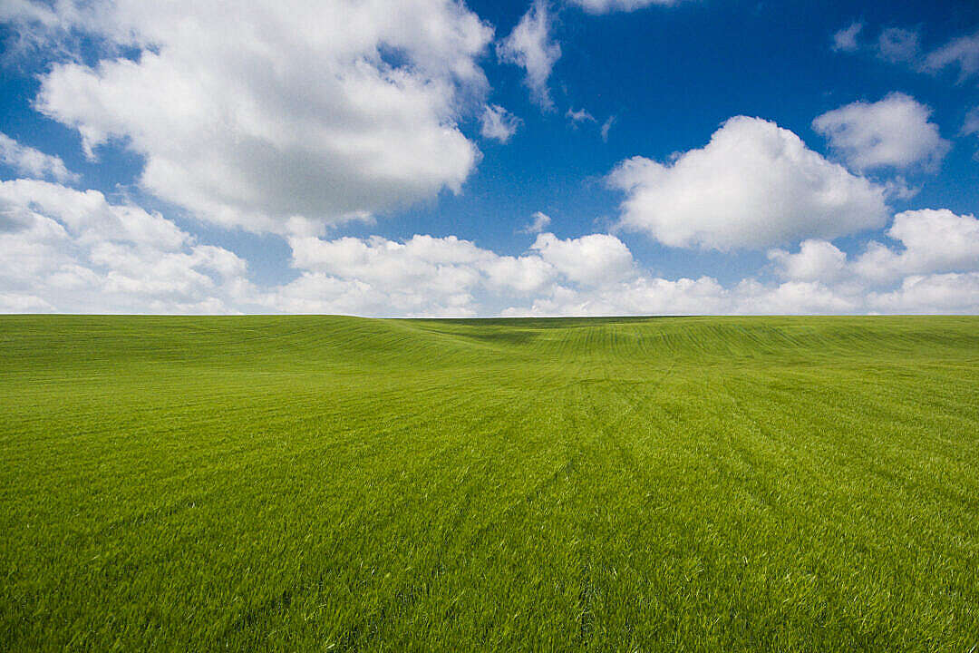 Download Unbelievably Clean Photo of Wheat Field with Clouds FREE Stock Photo