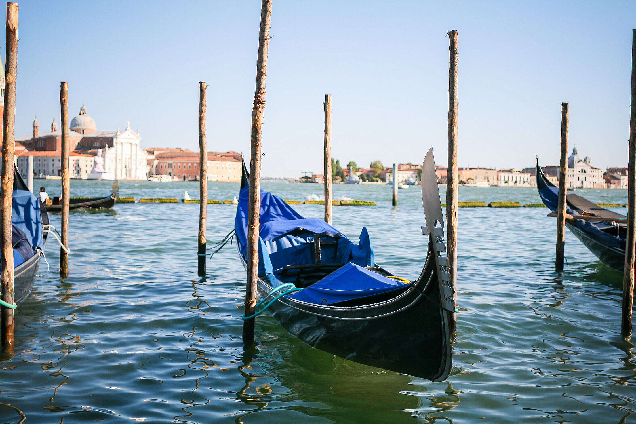 Download Venice Gondolas on Canal Grande Free Stock Photo