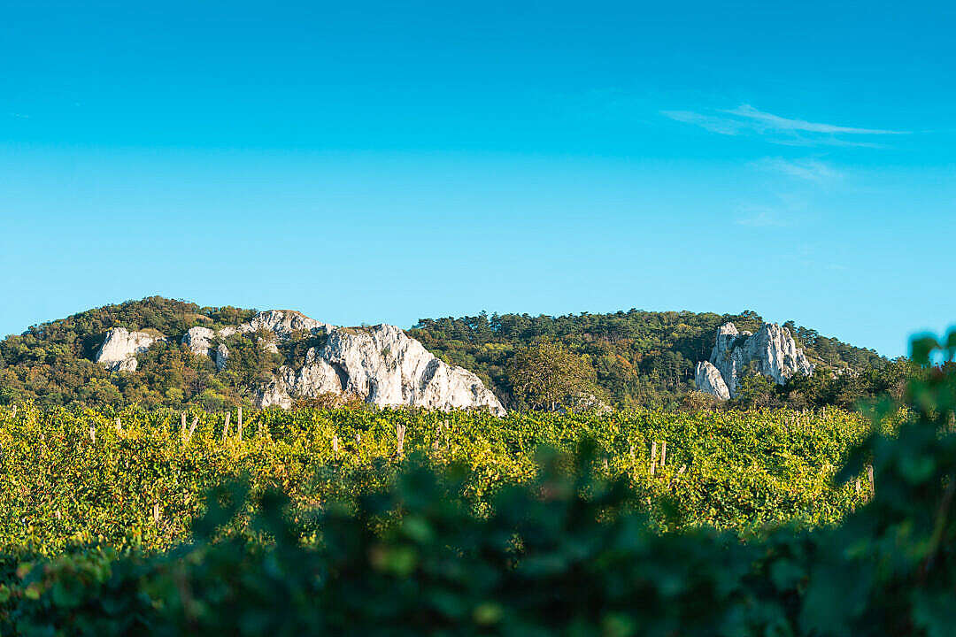 Download View of Vineyards and Pálava Rocks in South Moravia FREE Stock Photo