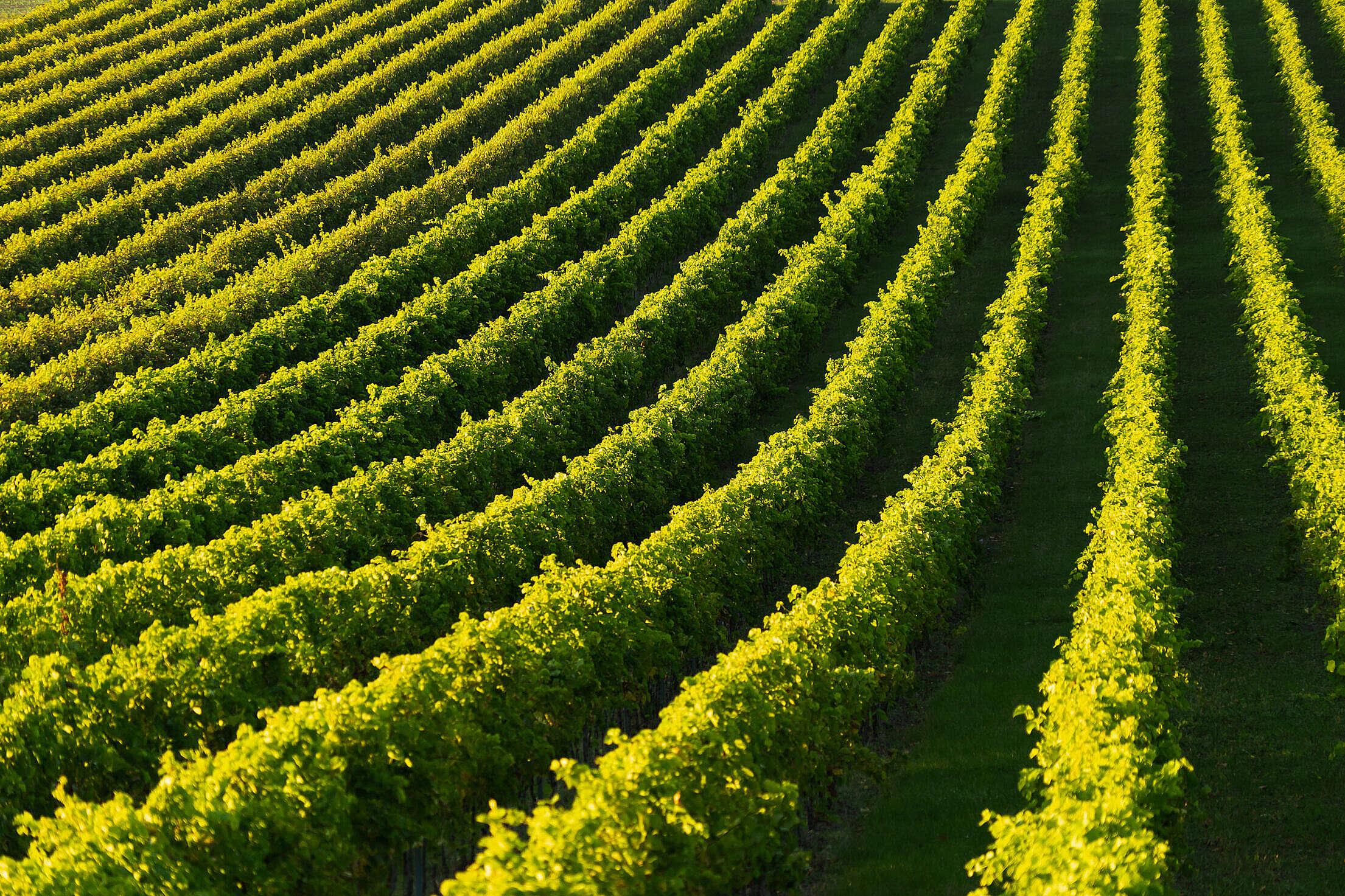 Vineyard Lanes Free Stock Photo