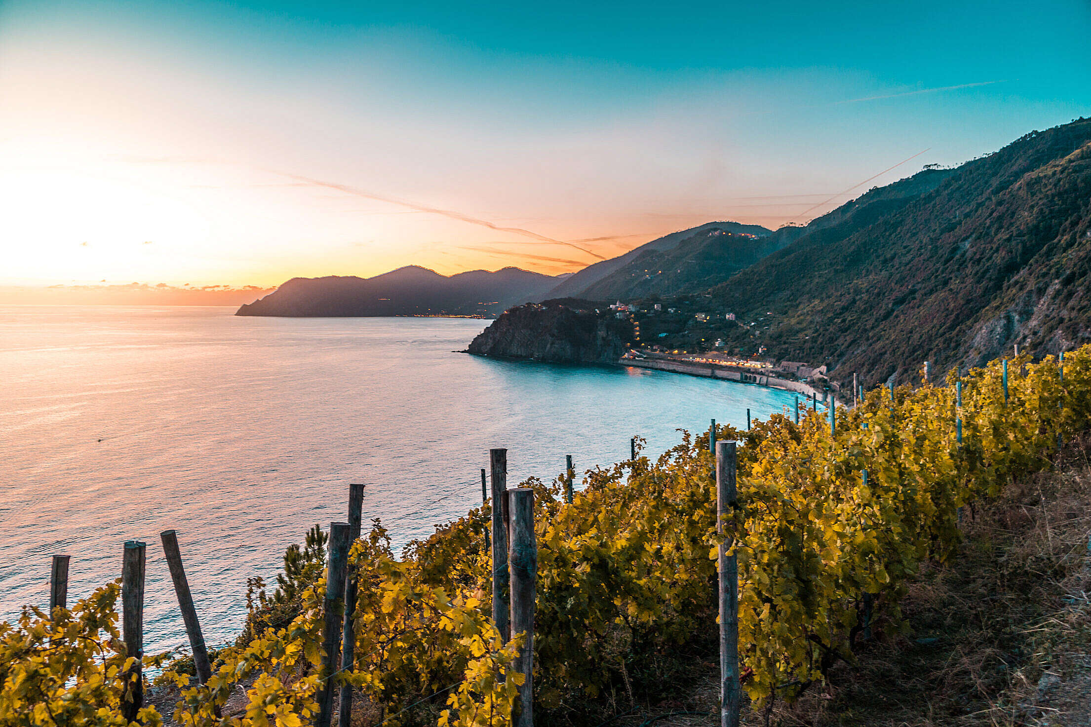 Vineyards on Italian Coast Free Stock Photo