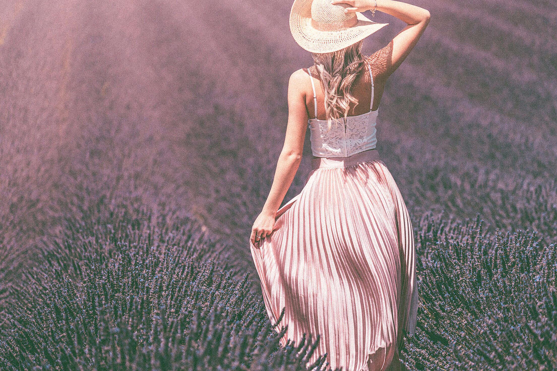 Vintage Lavender Field Free Stock Photo