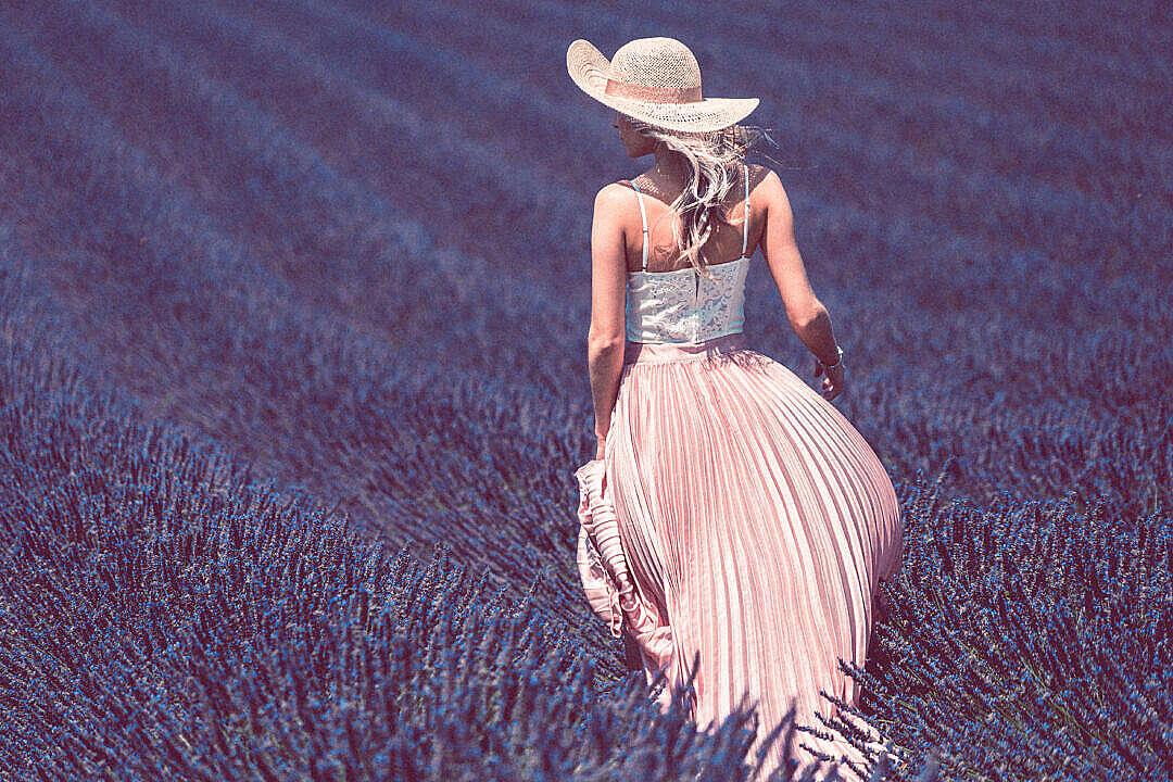 Download Walking in Lavender Field FREE Stock Photo