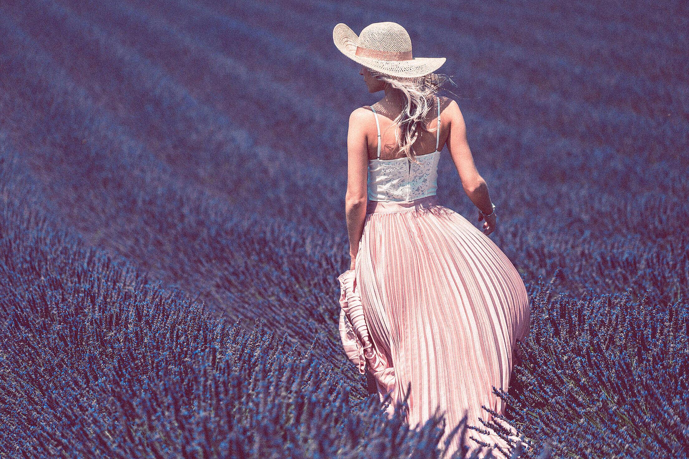 Walking in Lavender Field Free Stock Photo