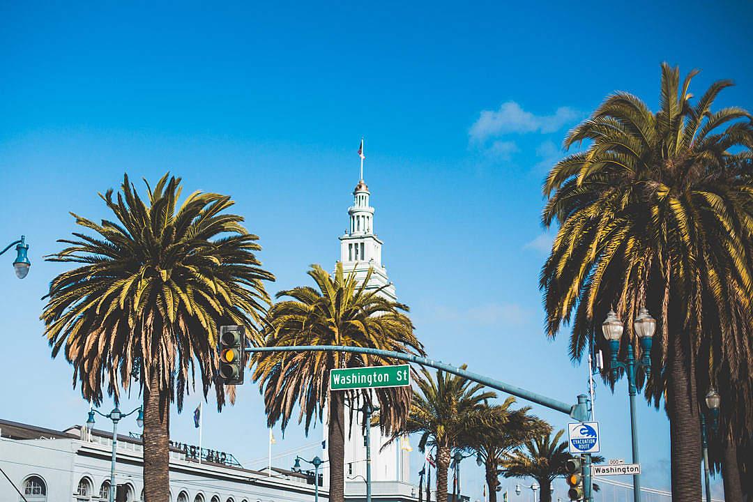 Download Washington Street Palms in San Francisco FREE Stock Photo