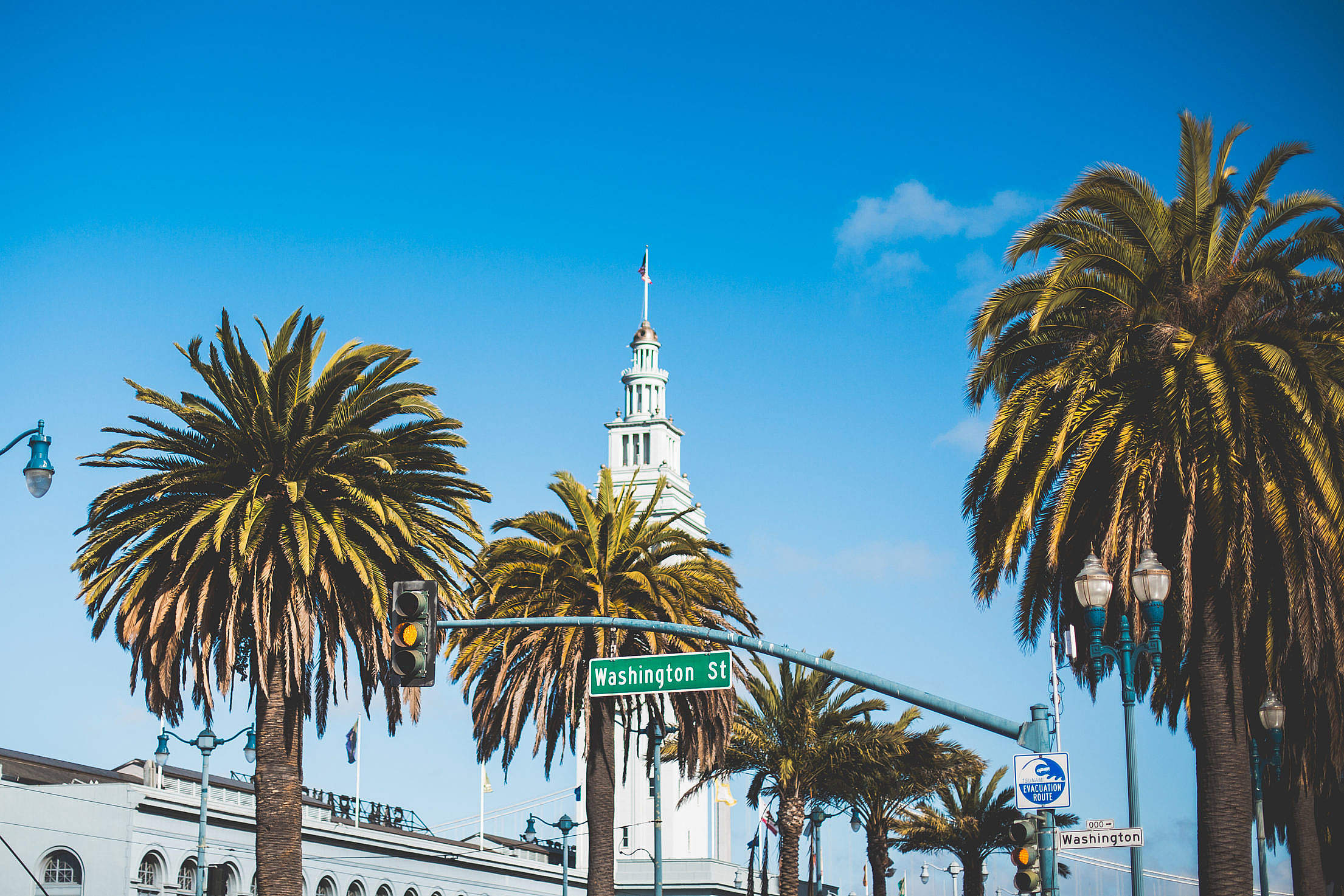 Washington Street Palms in San Francisco Free Stock Photo