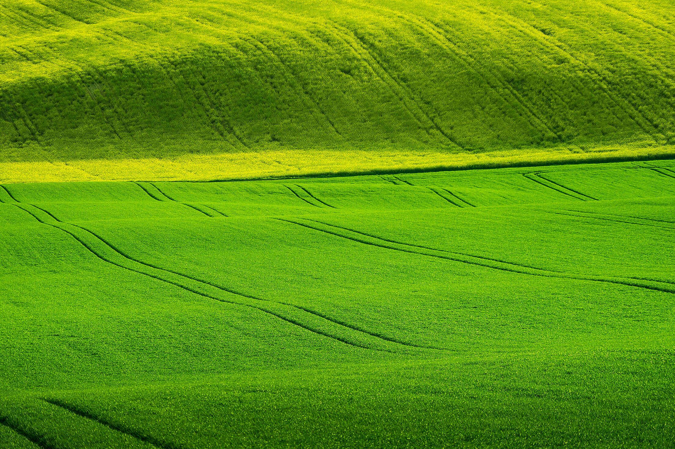 Wavy Green Wheat Fields Free Stock Photo