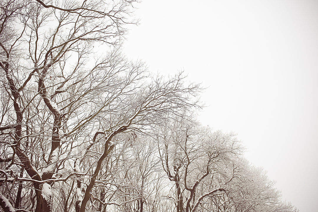 Download White and Brown Snowy Forest FREE Stock Photo