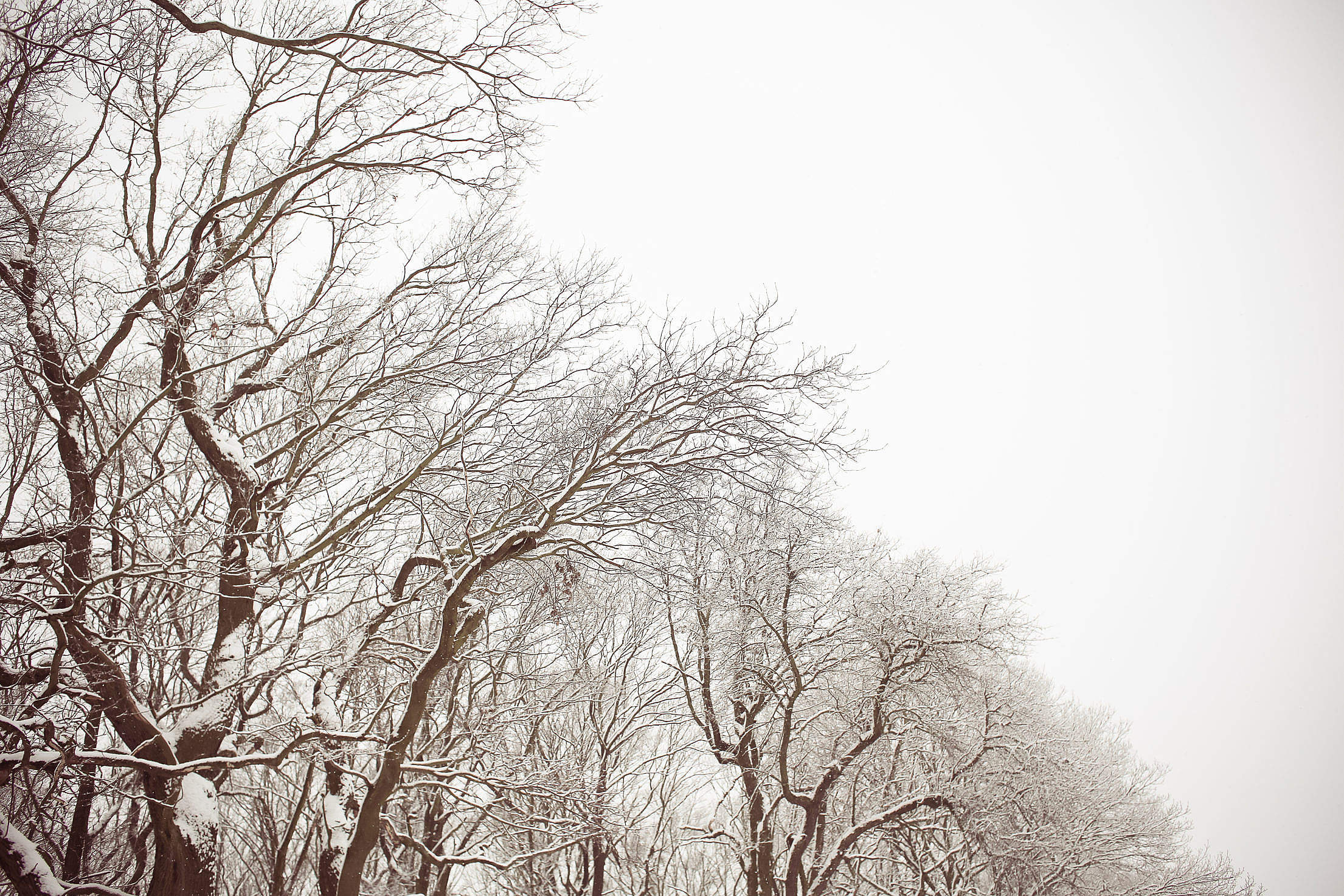 White and Brown Snowy Forest Free Stock Photo