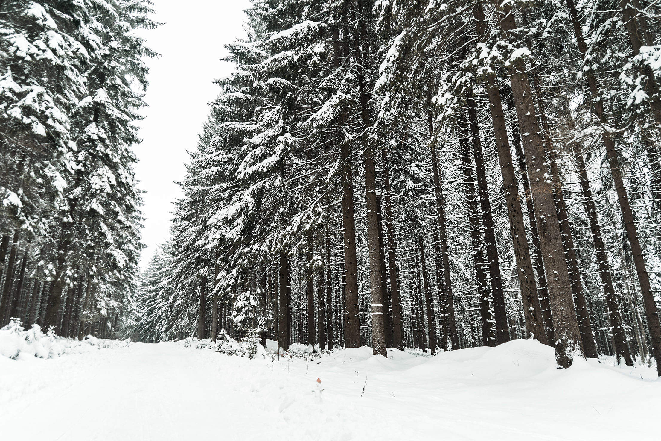 Winter Forest Covered with Snow Free Stock Photo