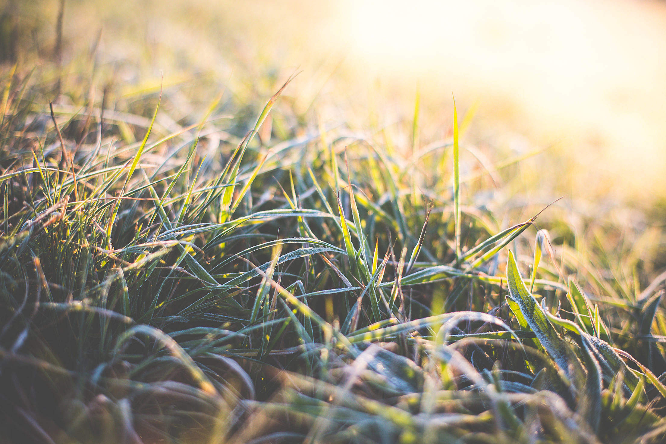 Winter Morning Grass Covered with Hoarfrost Free Stock Photo