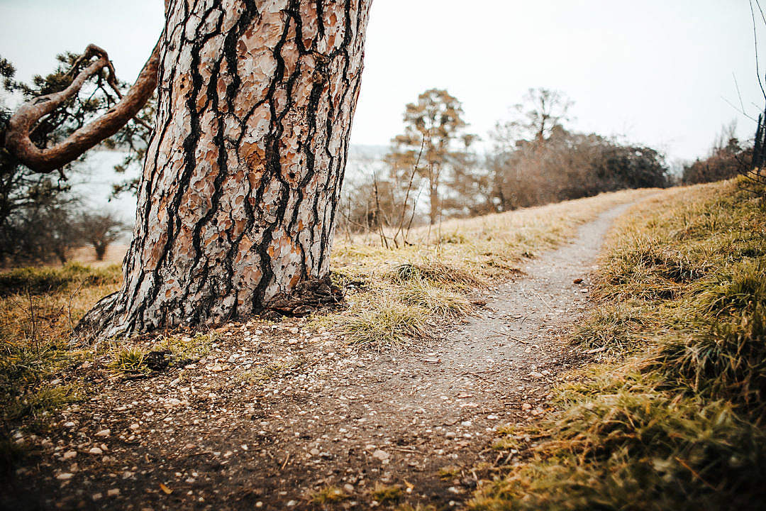 Download Winter Path Beside a Tree FREE Stock Photo