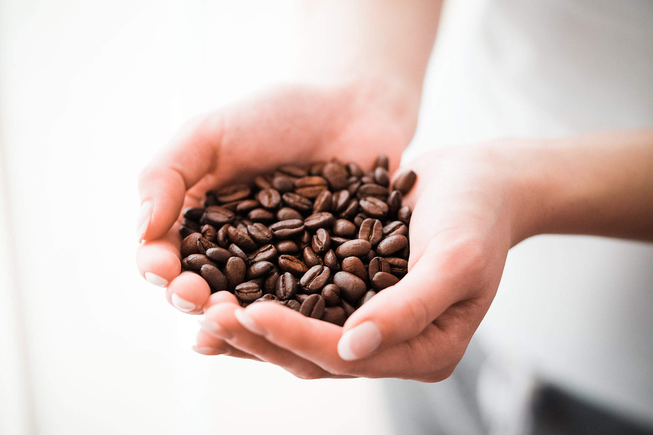 Woman Holding a Handful of Coffee Beans Free Stock Photo