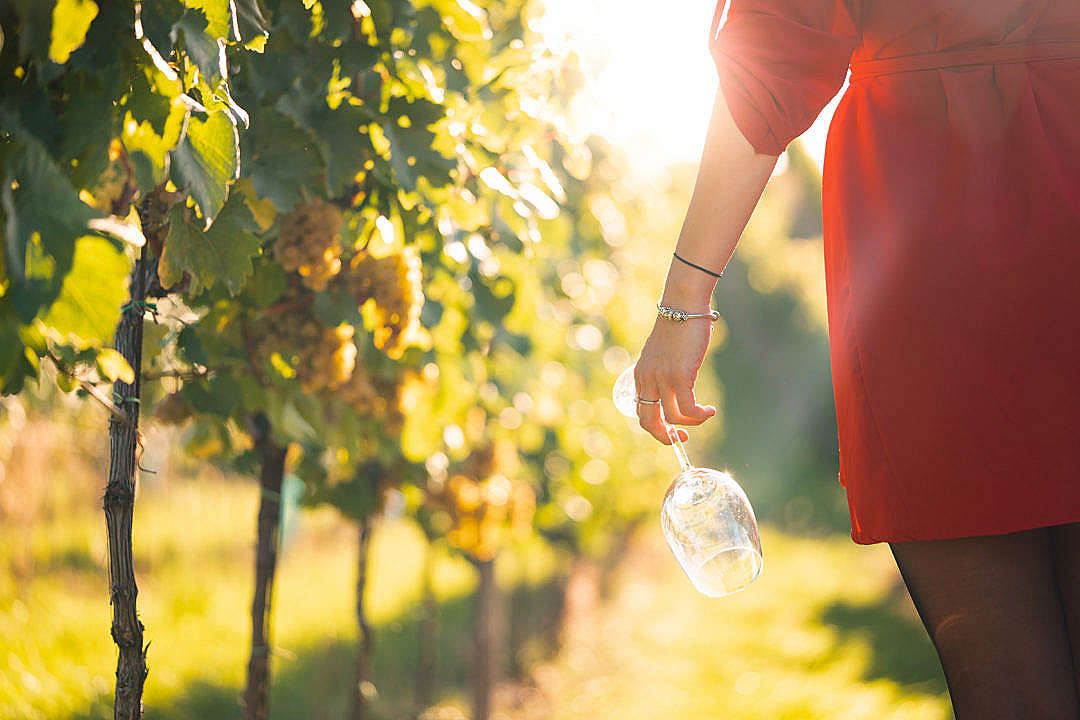 Download Woman Holding a Wine Glass In a Vineyard FREE Stock Photo