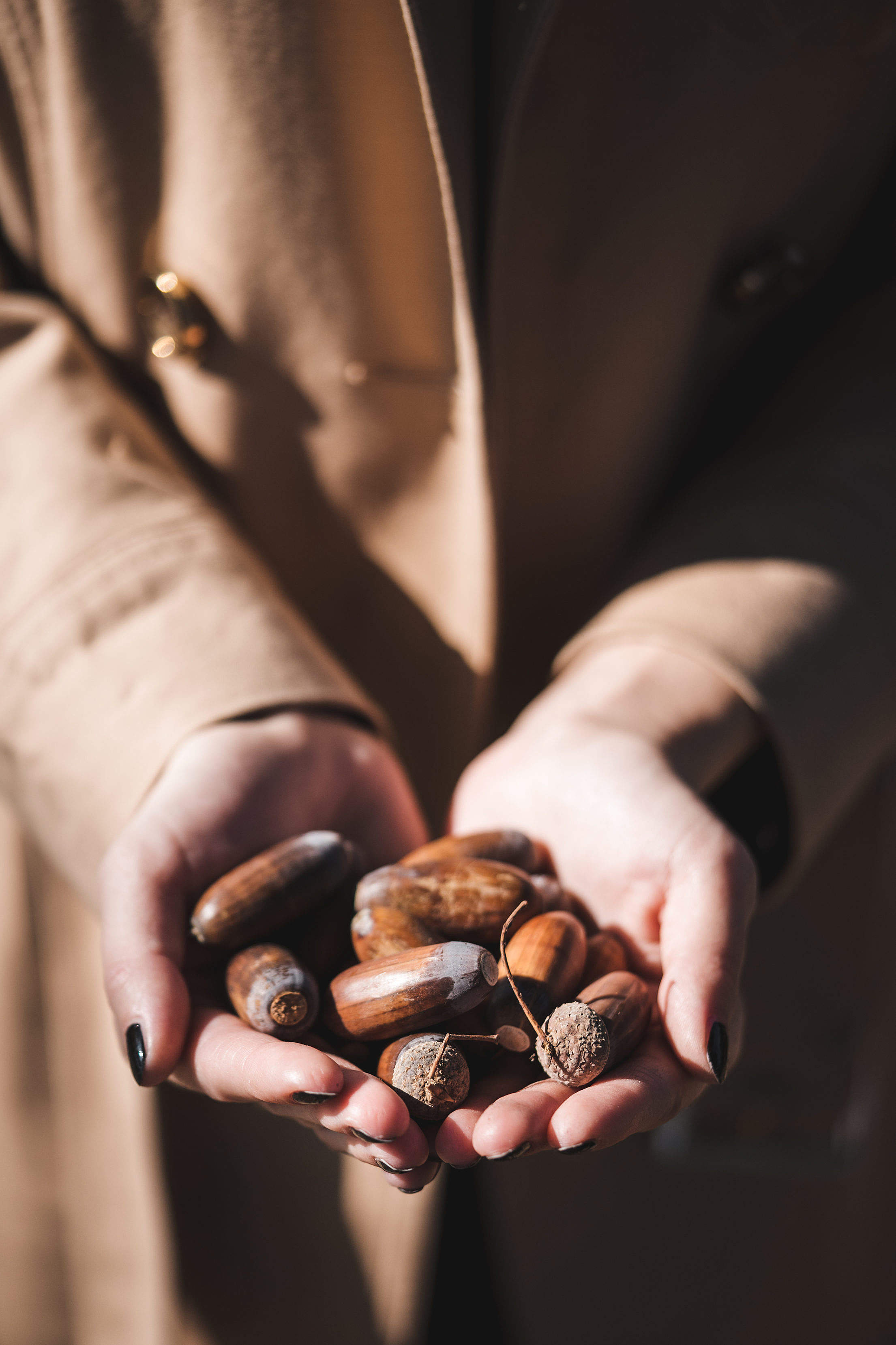Woman Holding Acorns in Her Hands Free Stock Photo