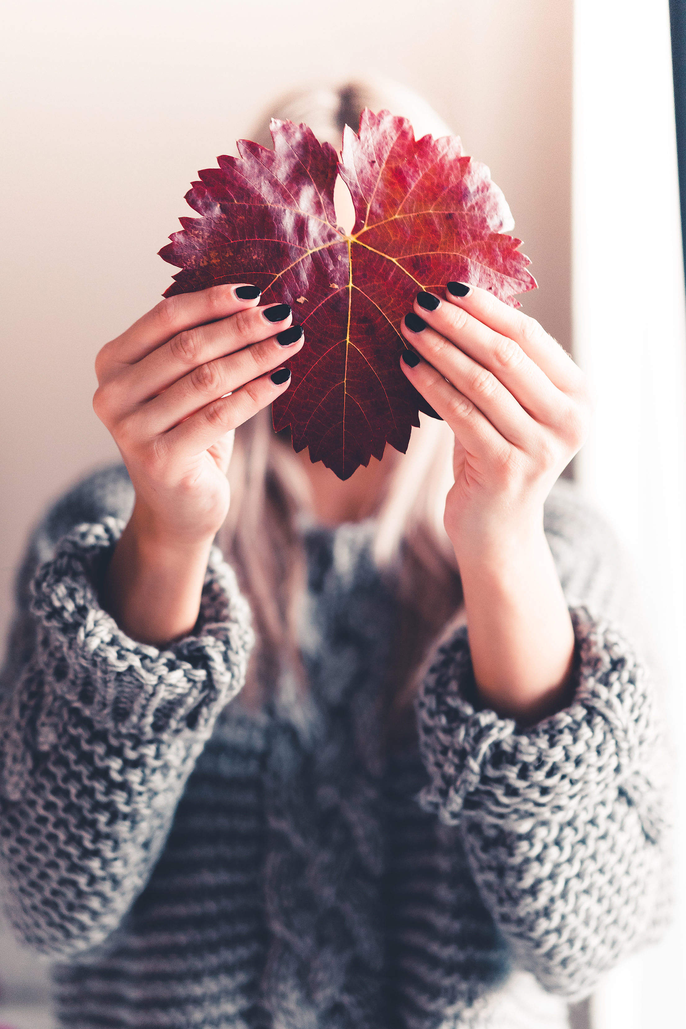 Woman Holding an Autumn Leaf Free Stock Photo