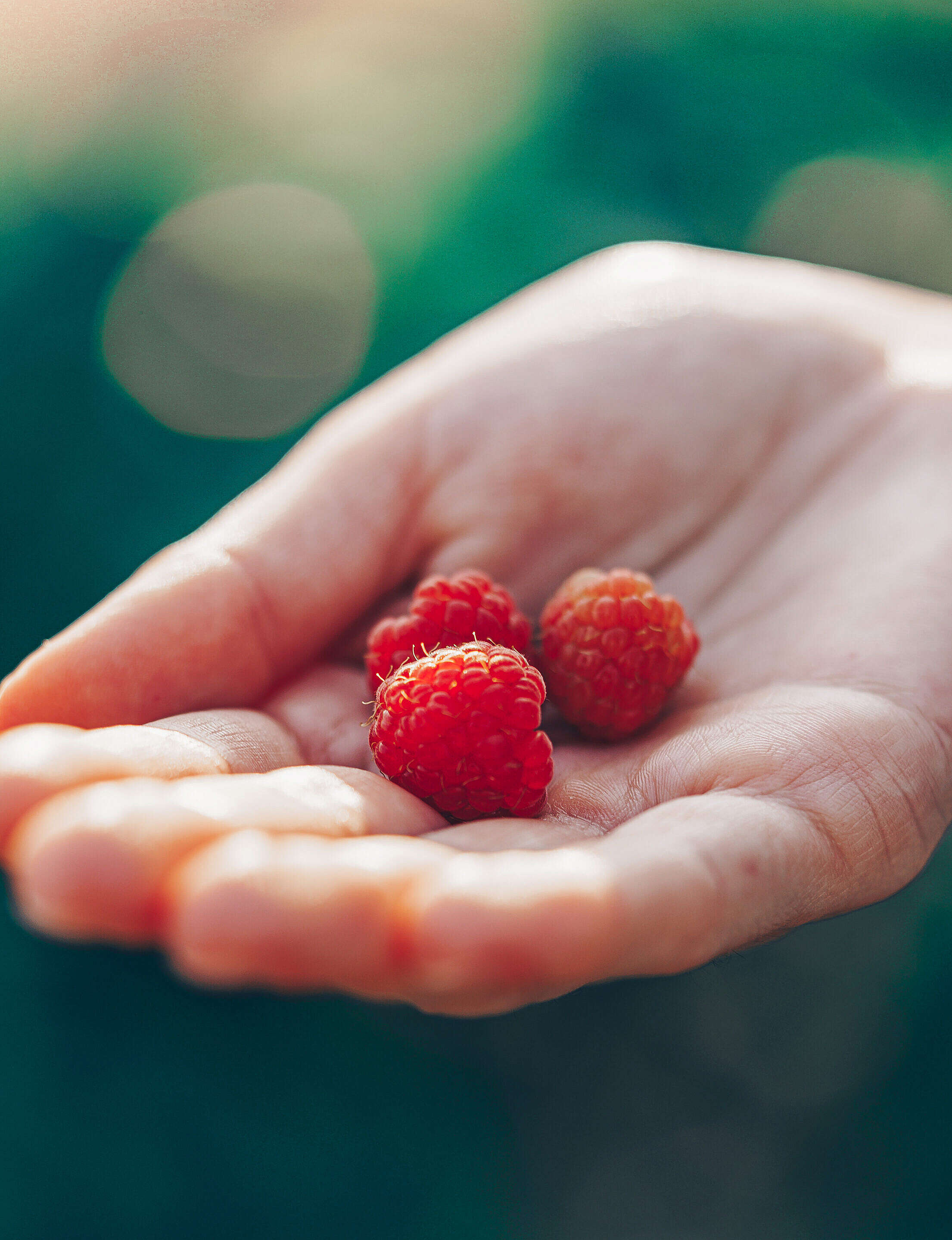 Woman Holding First Raspberries in Her Palm Free Stock Photo