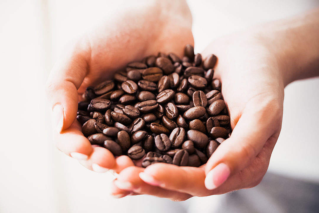 Download Woman Holding Handful of Roasted Coffee Beans FREE Stock Photo