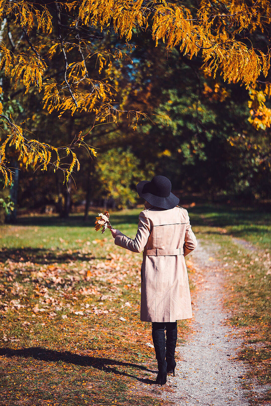 Download Woman in a Park Holding Leaves on a Sunny Autumn Day FREE Stock Photo