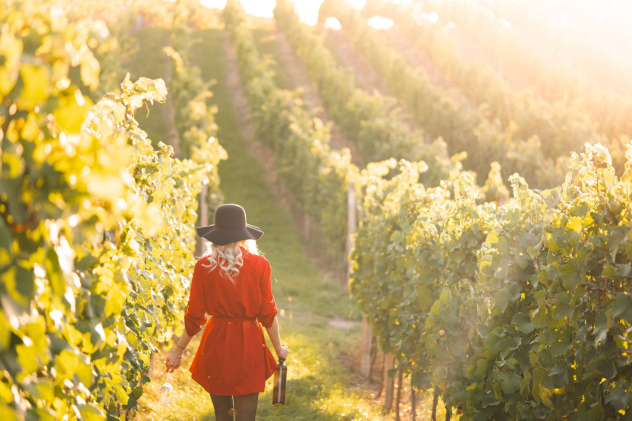 Woman in a Red Dress Holding a Glass of Wine in The Vineyard Free Stock Photo