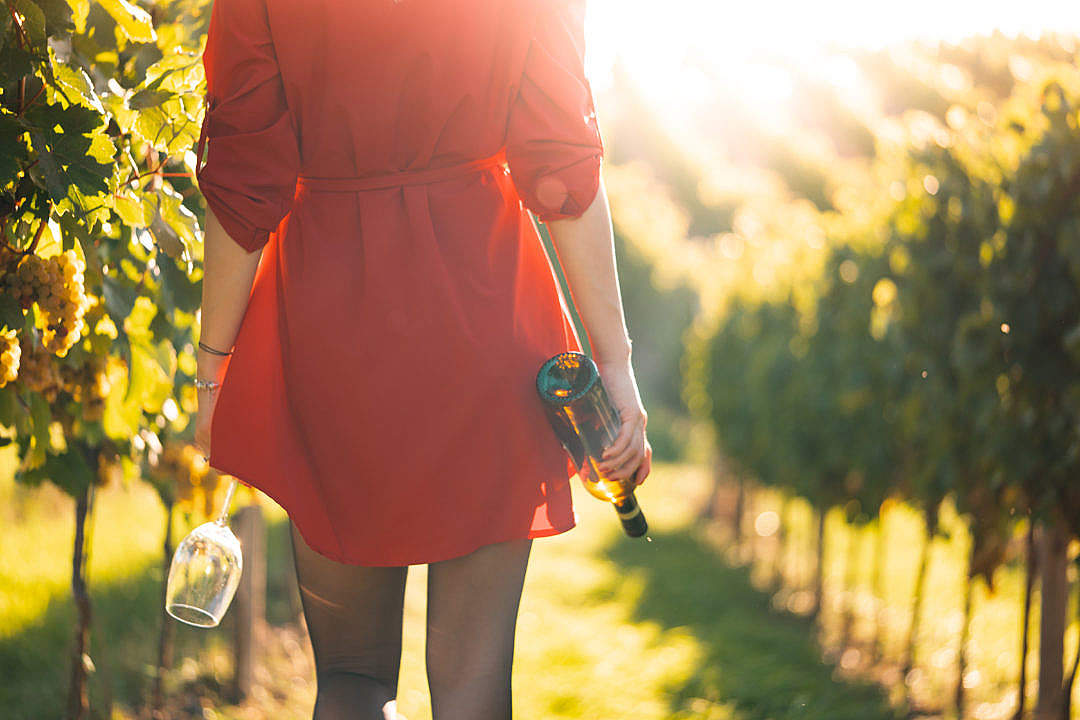 Download Woman in Red Dress Walking in a Vineyard FREE Stock Photo