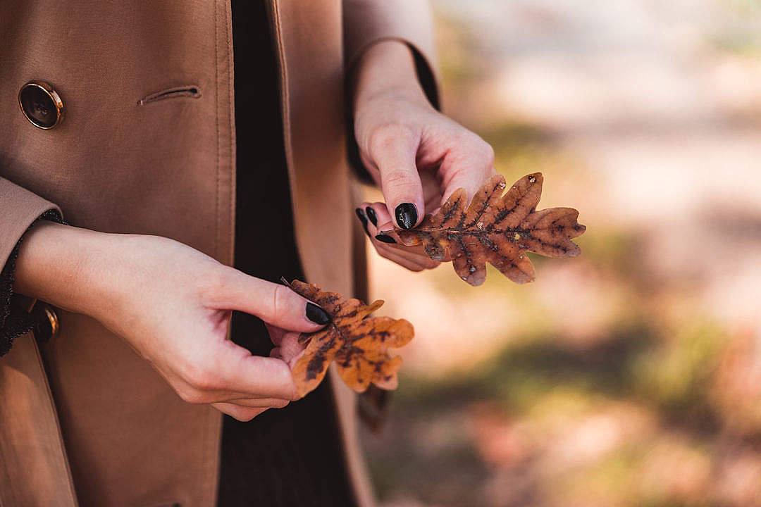Download Woman in Trench Coat Holding Autumn Leaves FREE Stock Photo