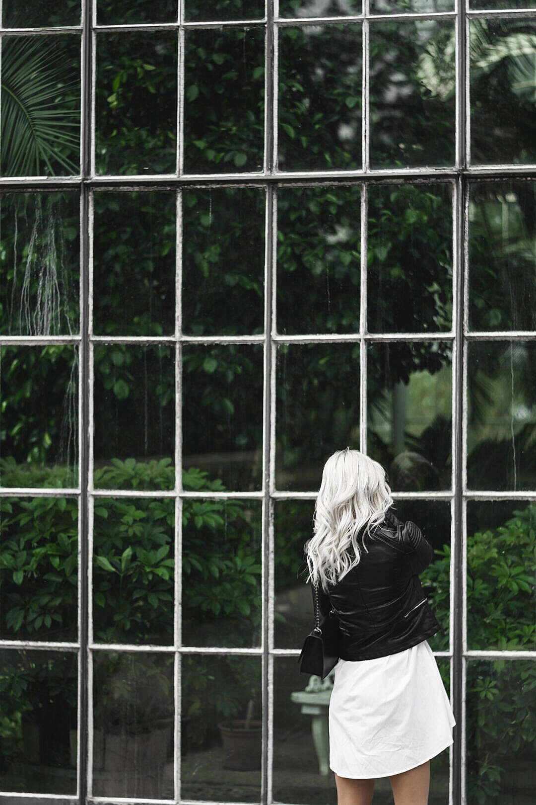 Download Woman Looking Through Old Windows of The Botanical Garden FREE Stock Photo