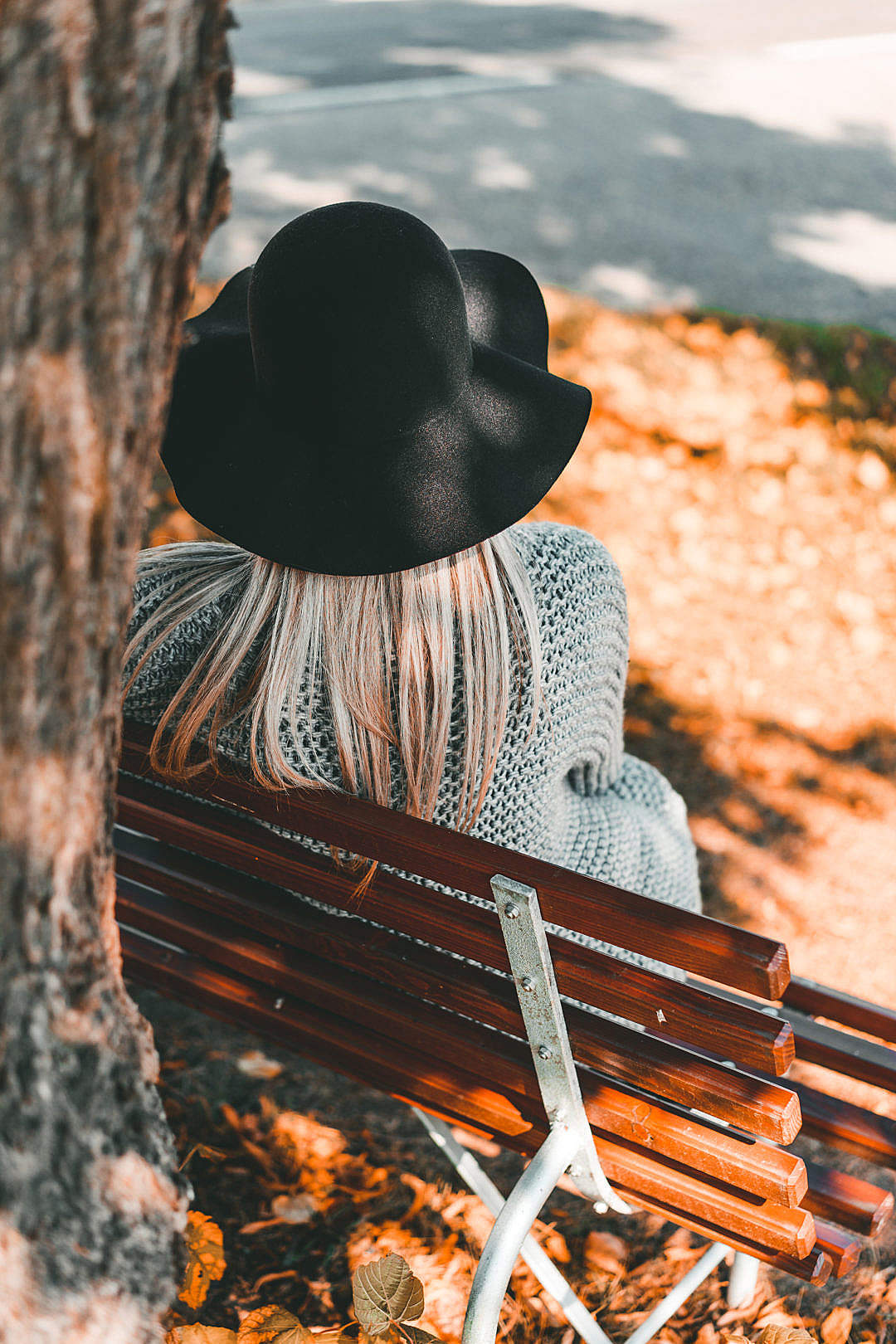 Download Woman Sitting on a Bench Back View FREE Stock Photo