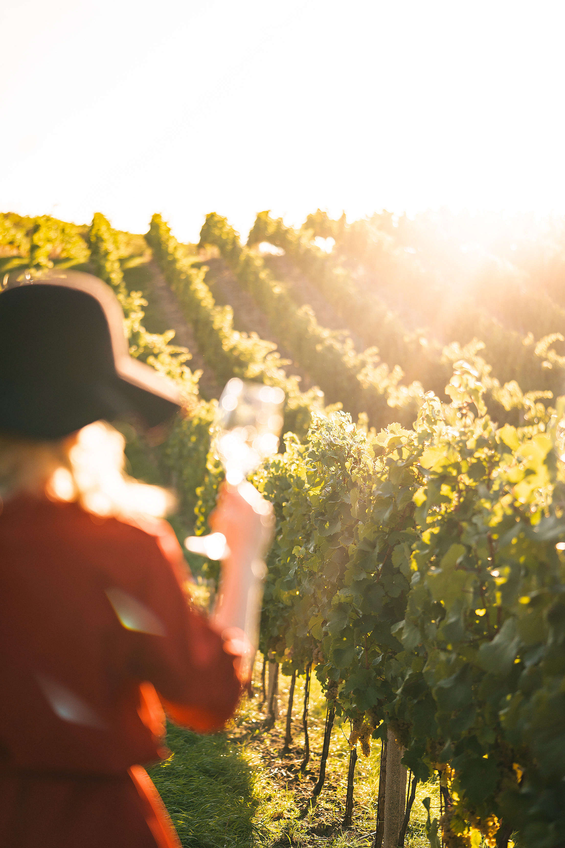 Woman Standing in The Vineyard Free Stock Photo