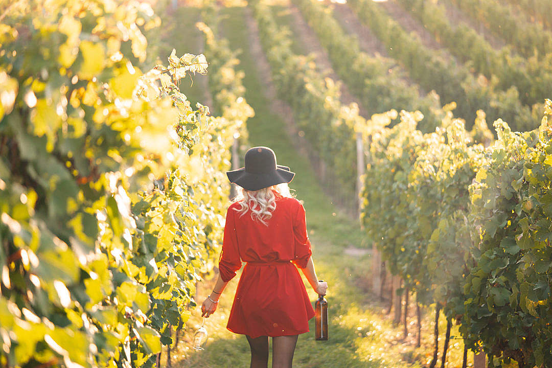 Download Woman Walking Through The Vineyard FREE Stock Photo