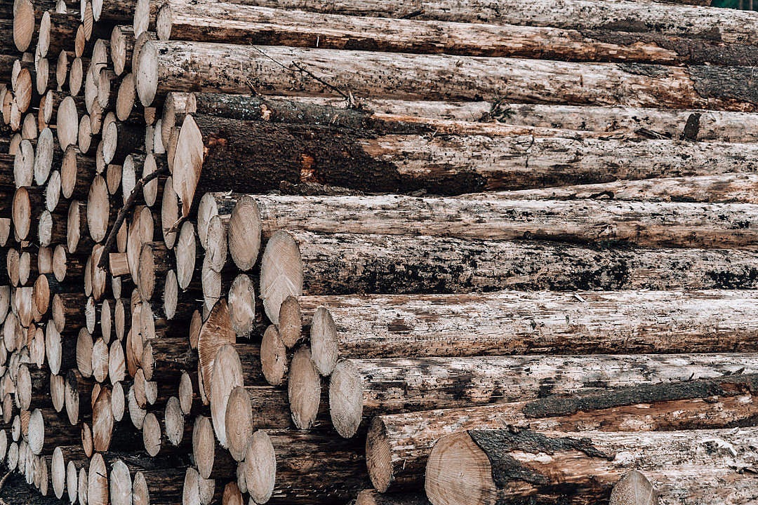 Download Wood Logs FREE Stock Photo