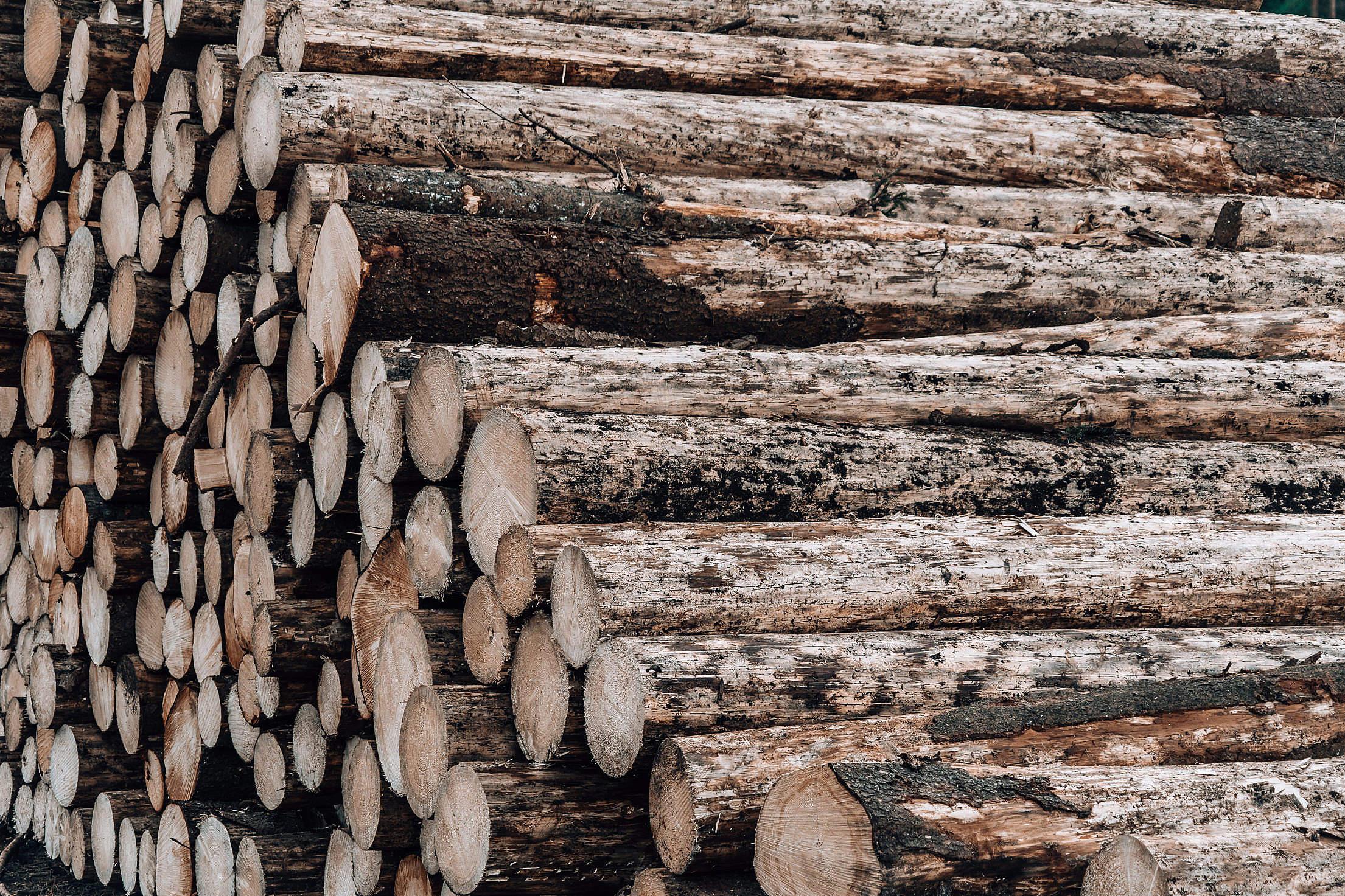 Wood Logs Free Stock Photo