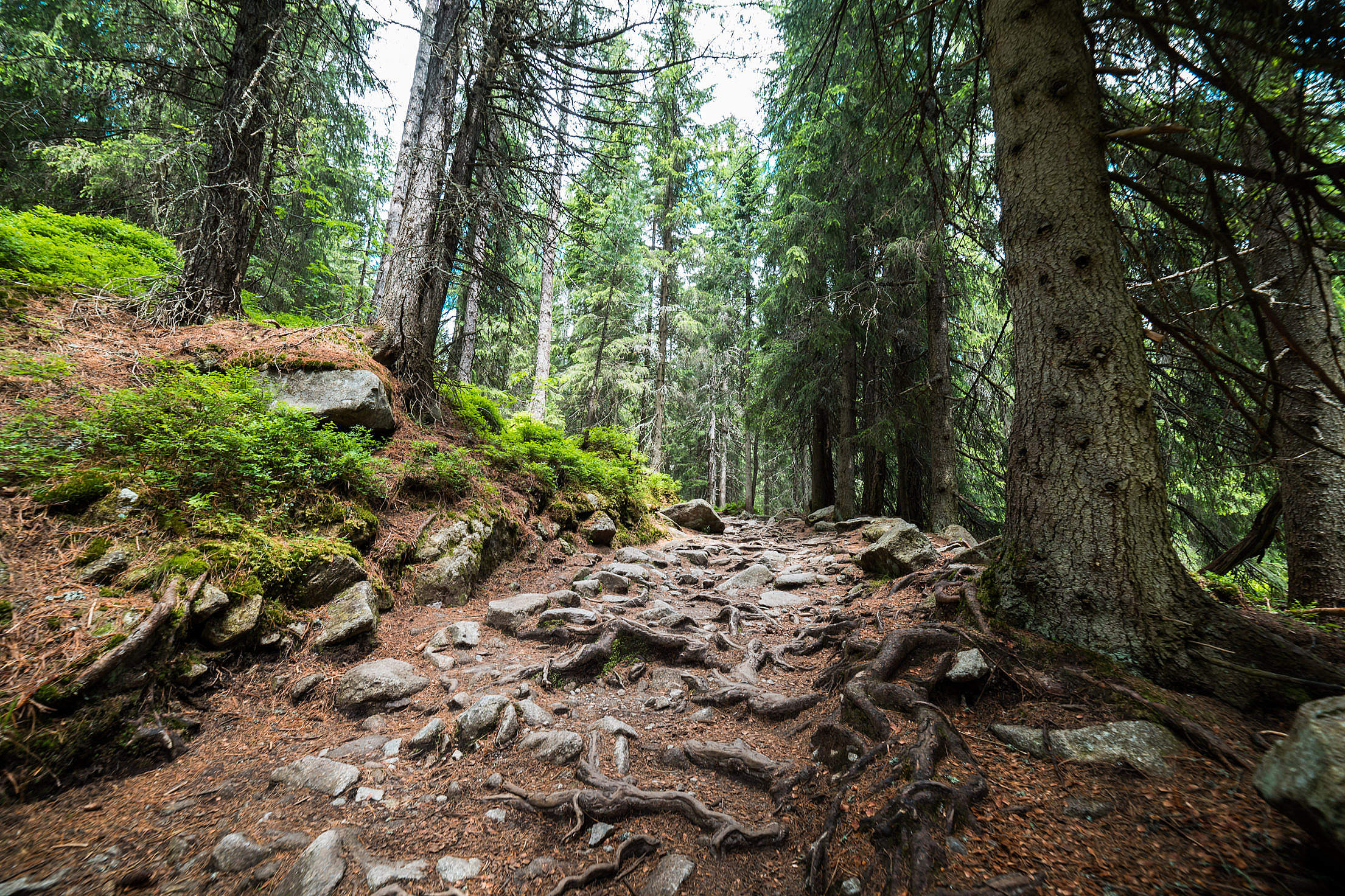 Download Woods Pathway Forest Trail Free Stock Photo