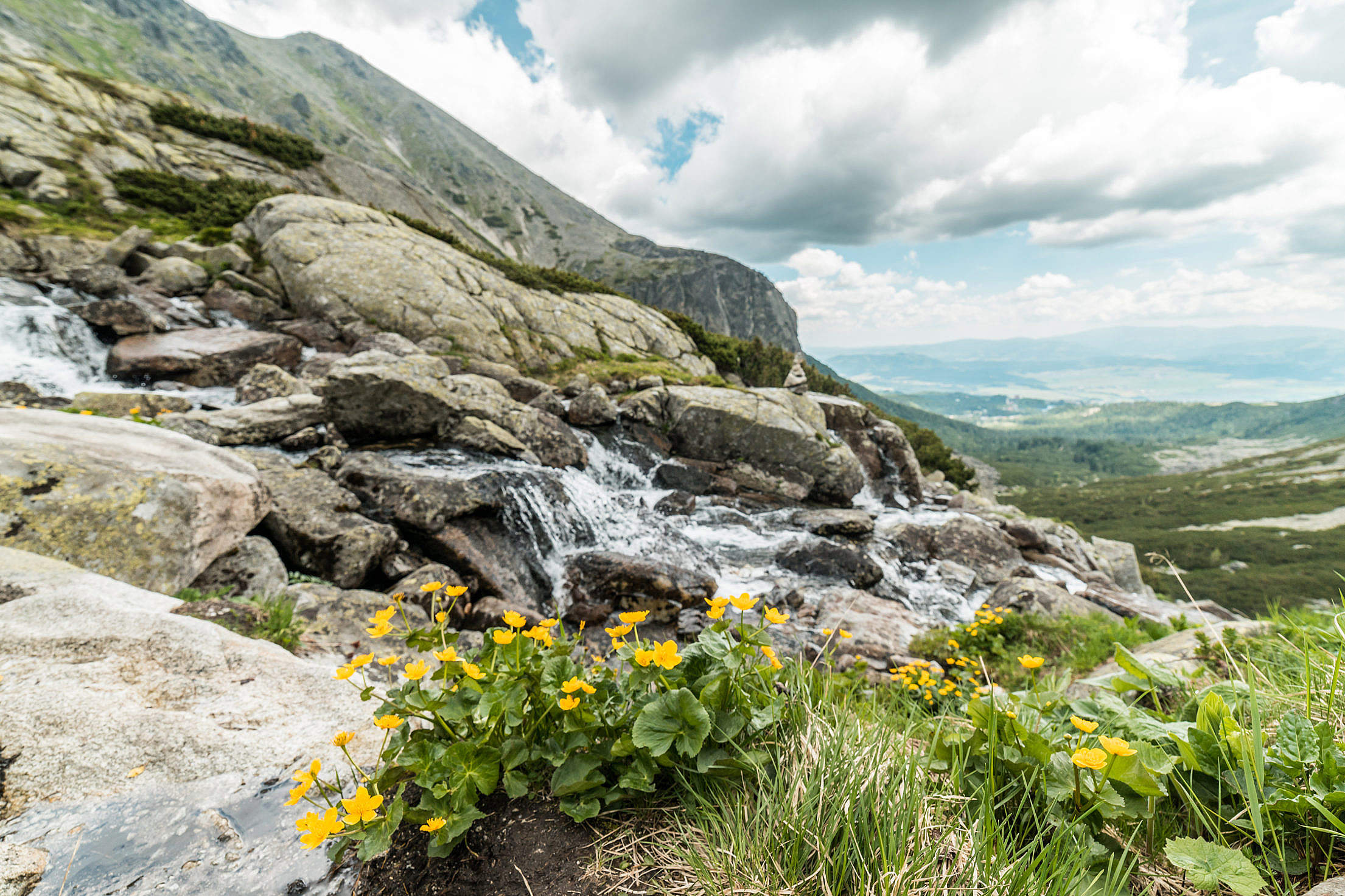 Yellow Flowers and Mountain Waterfall in Pure Nature Free Stock Photo