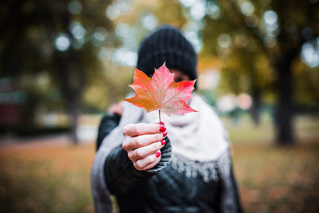 Download Young Girl Holding Autumn Colored Maple Leaf #2 FREE Stock Photo