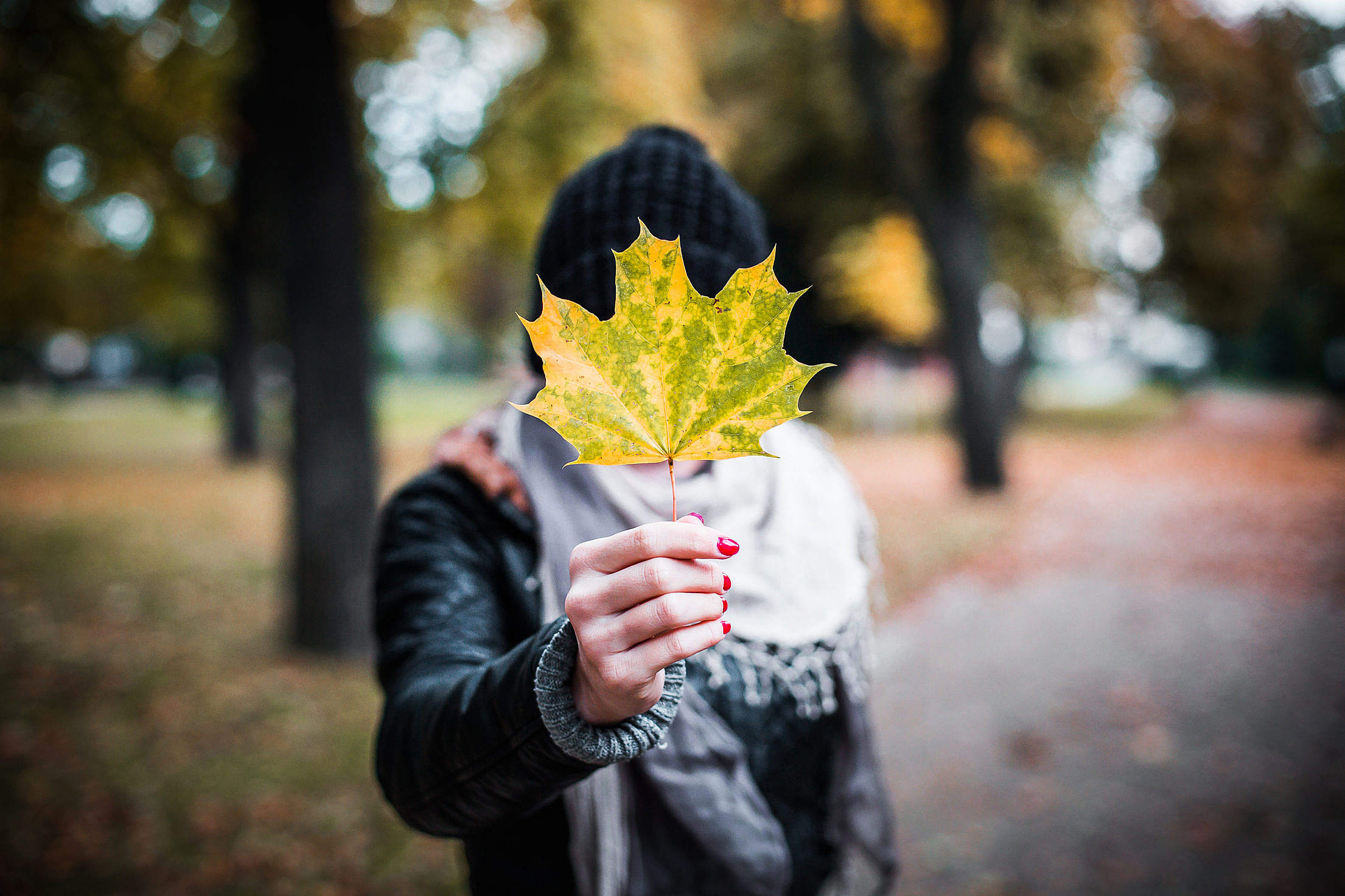 (click to download) Young Girl Holding Autumn Colored Maple Leaf FREE Stock Photo