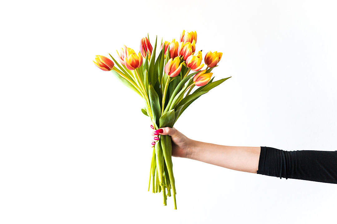 Download Young Woman Holding Bouquet of Kees Nelis Tulips FREE Stock Photo